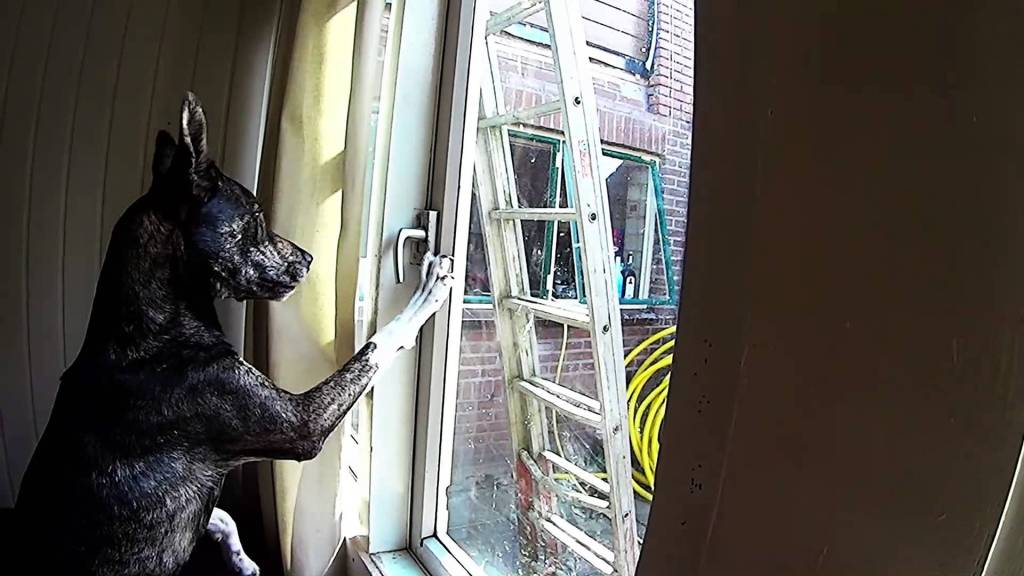 Persistent Dog Figures Out How to Unlock Window to the Outside World