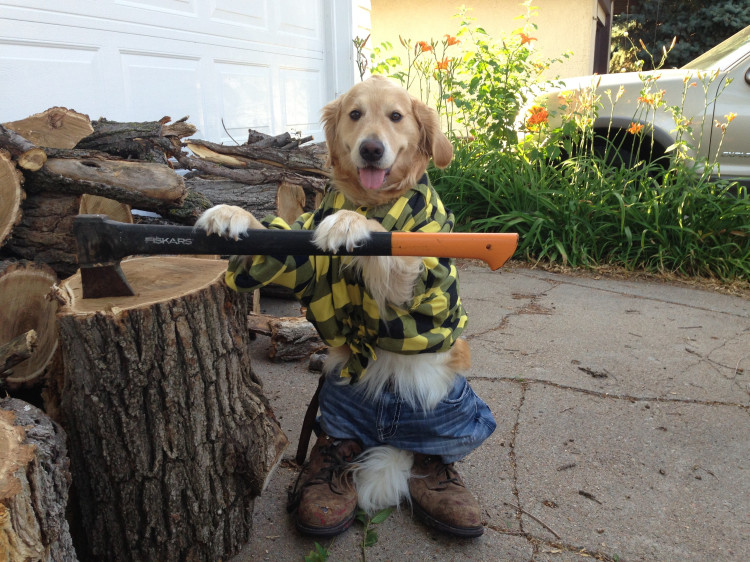 Bailey Chopping Wood