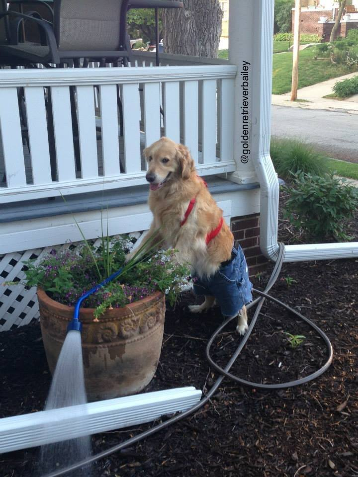 Bailey Planting