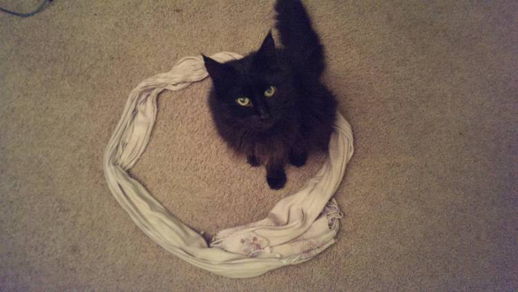 Black Cat in Circle