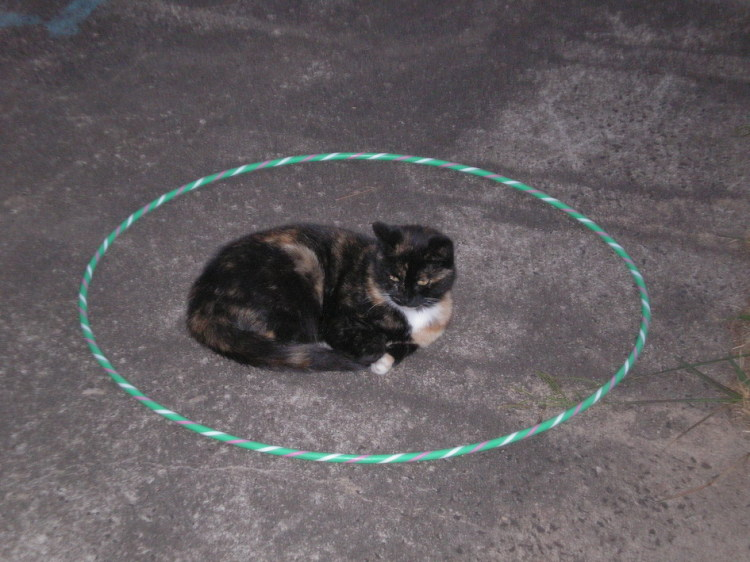 Calico Tortie Circle