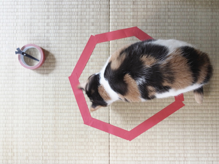 Cat Entering Tape Circle