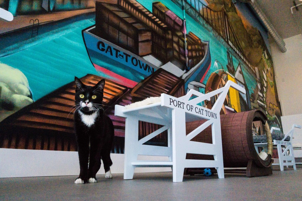 Cat Town Cafe, The First Operational Cat Cafe in the United States Opens in Oakland, California