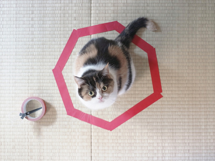 Cat in Tape Circle