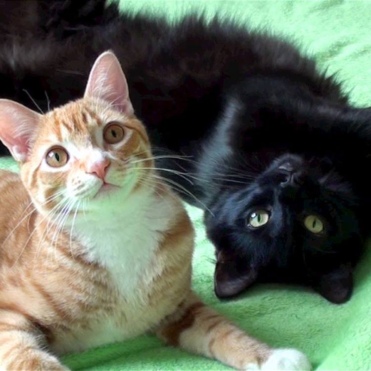 Funny Cat Videos Cole And Marmalade