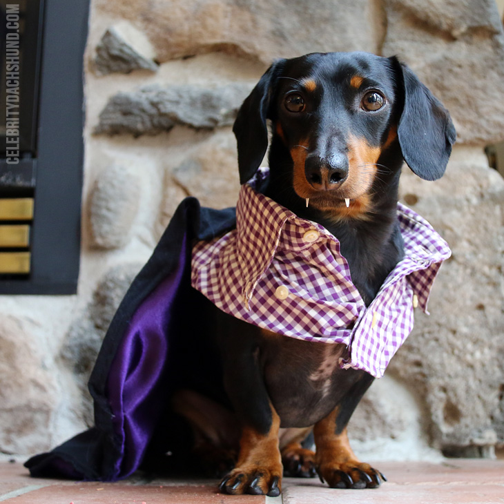 Crusoe the Celebrity Dachshund Shares His Favorite Halloween Costumes