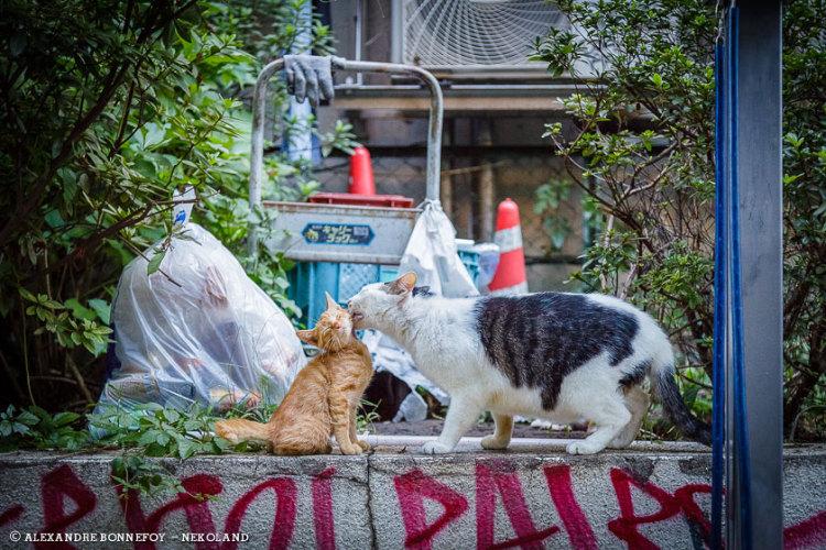 Kitties on Wall