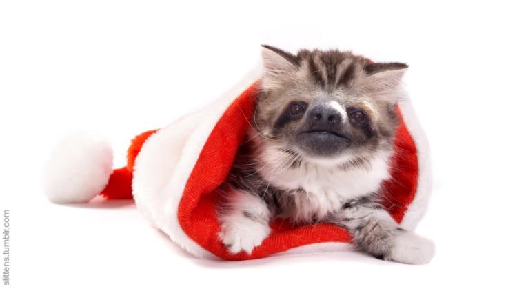 Santa Slitten