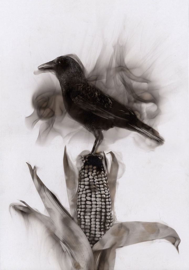 Candle Soot Bird Paintings by Steven Spazuk