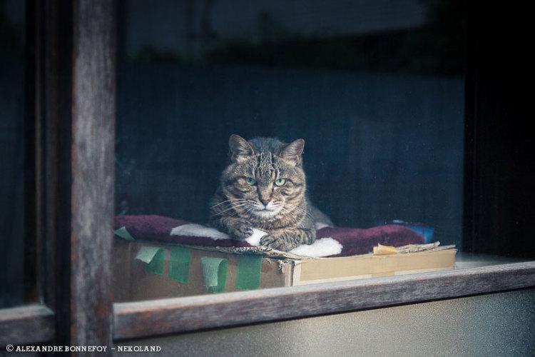 Tabby on Box