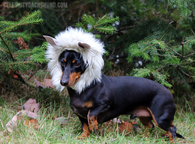 Wolf Dog Costume