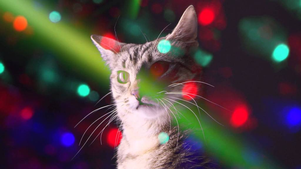 A Meow Mix Ad Featuring Adorable Cats Dancing About to an EDM Remix of the Classic Jingle