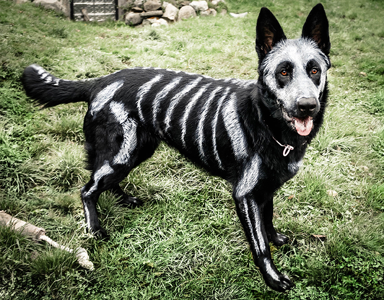Skeleton Dog
