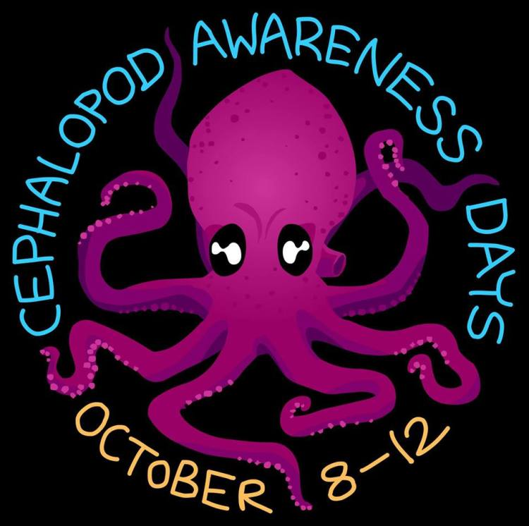 cephalopod awareness days