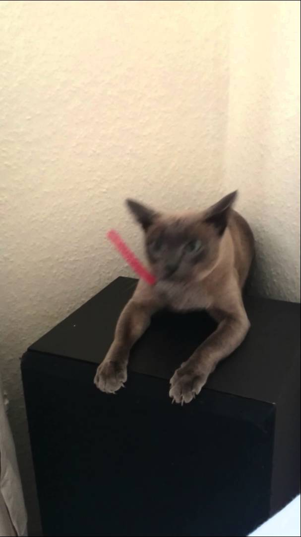 Determined Cat Dives Into a Very Small Space Behind a Speaker and Successfully Retrieves Her Favorite Toy