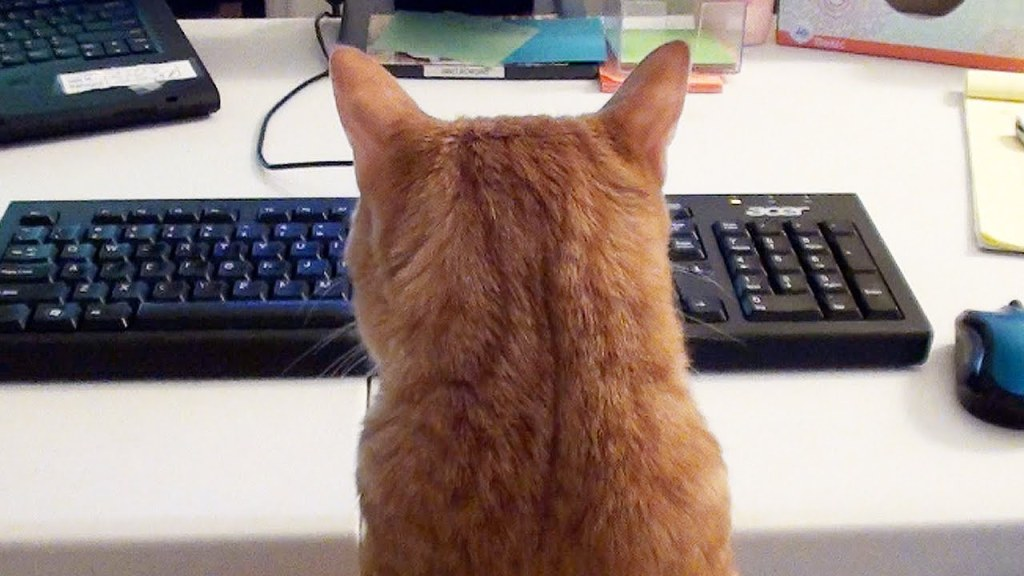 Two Cats Demonstrate How Best To Disturb a Human Who Works From Home