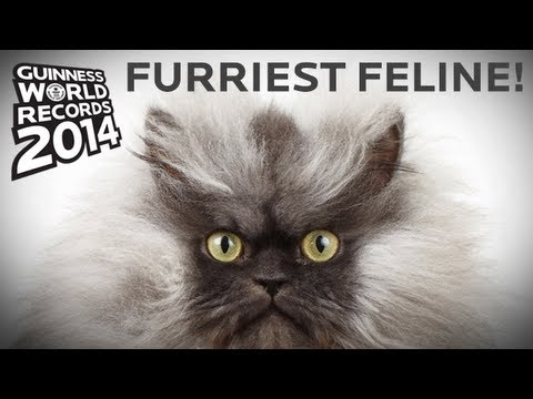 rescued california cat sets the new guinness world record for cat with the longest fur