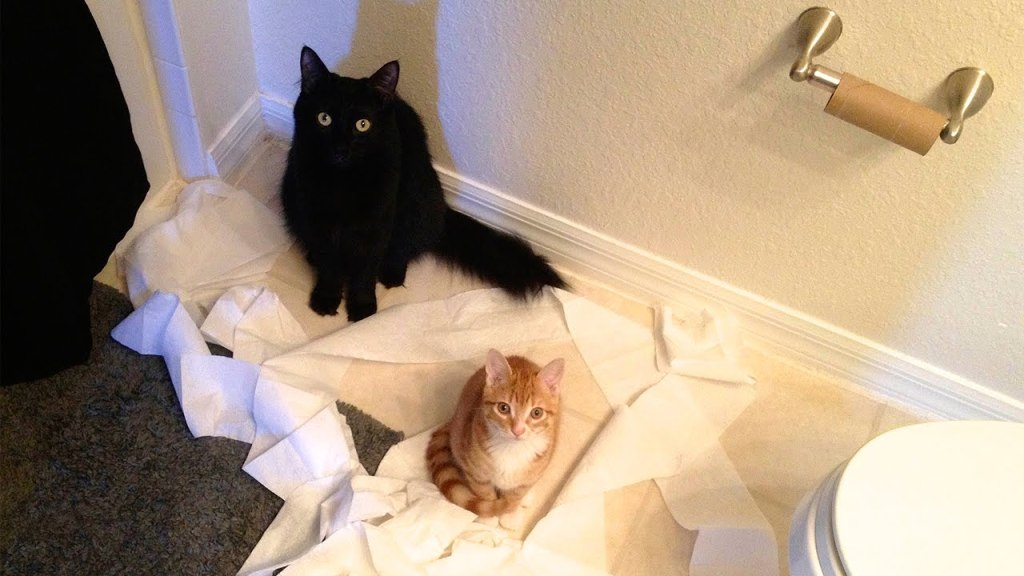 The Feline Duo of Cole and Marmalade Explain the Very Fickle Logic of Cats