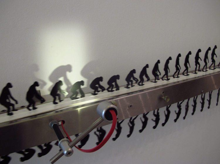 Involucion Primate by DOMA