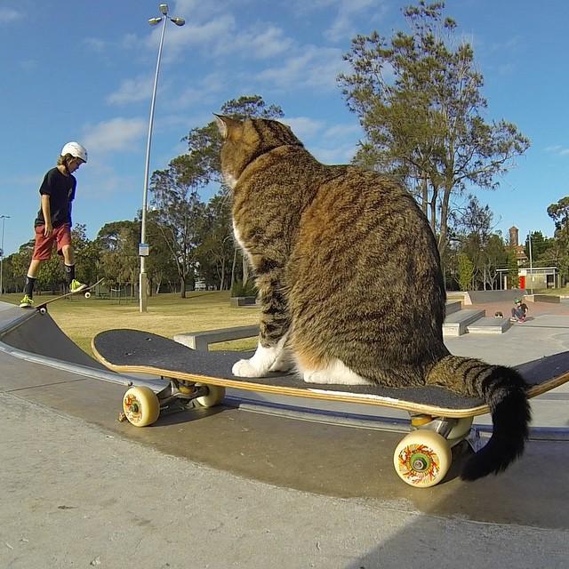 Didga Skateboarding