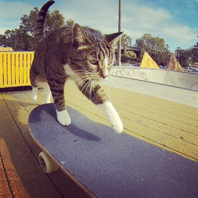 Didga the Skateboarding Cat