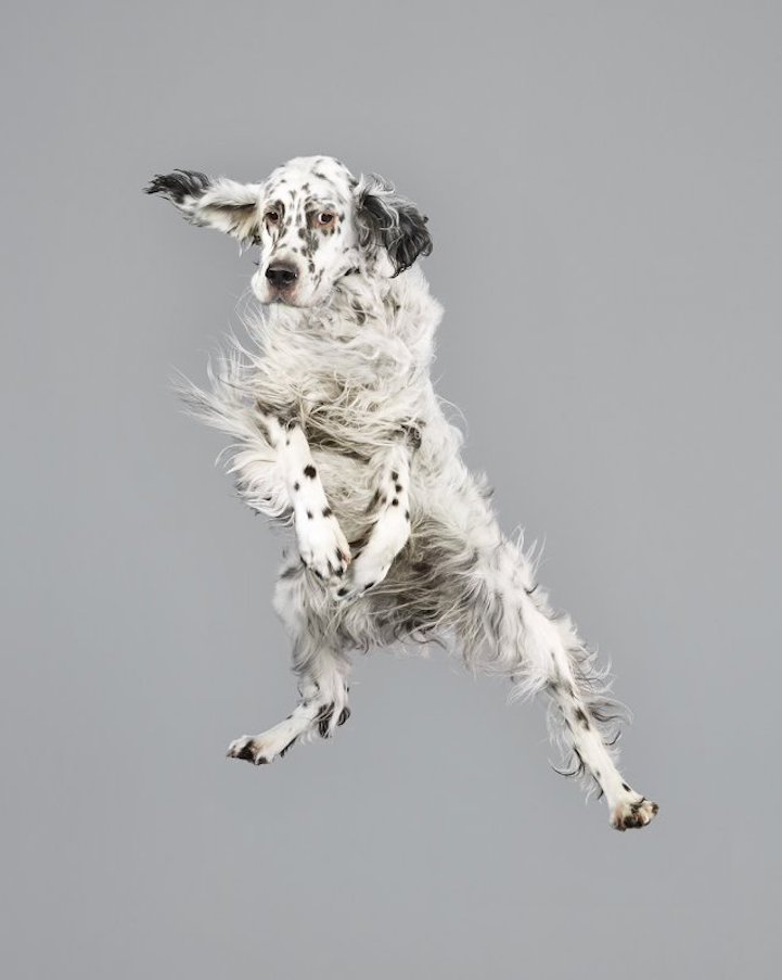 Freestyle Dalmation