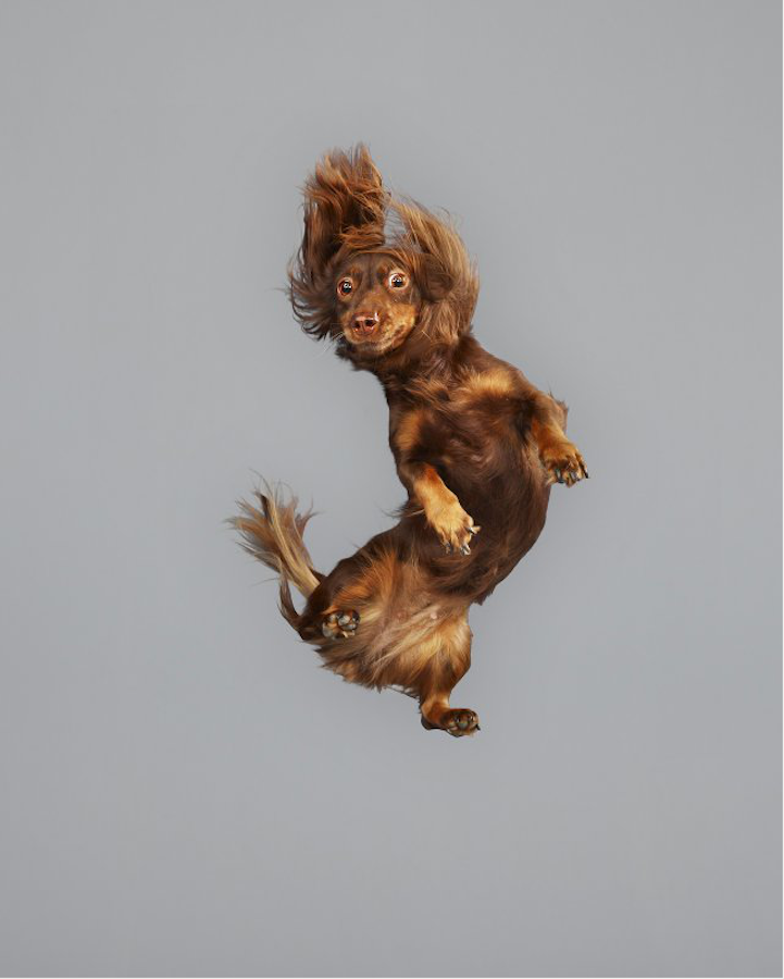 Freestyle Doxie