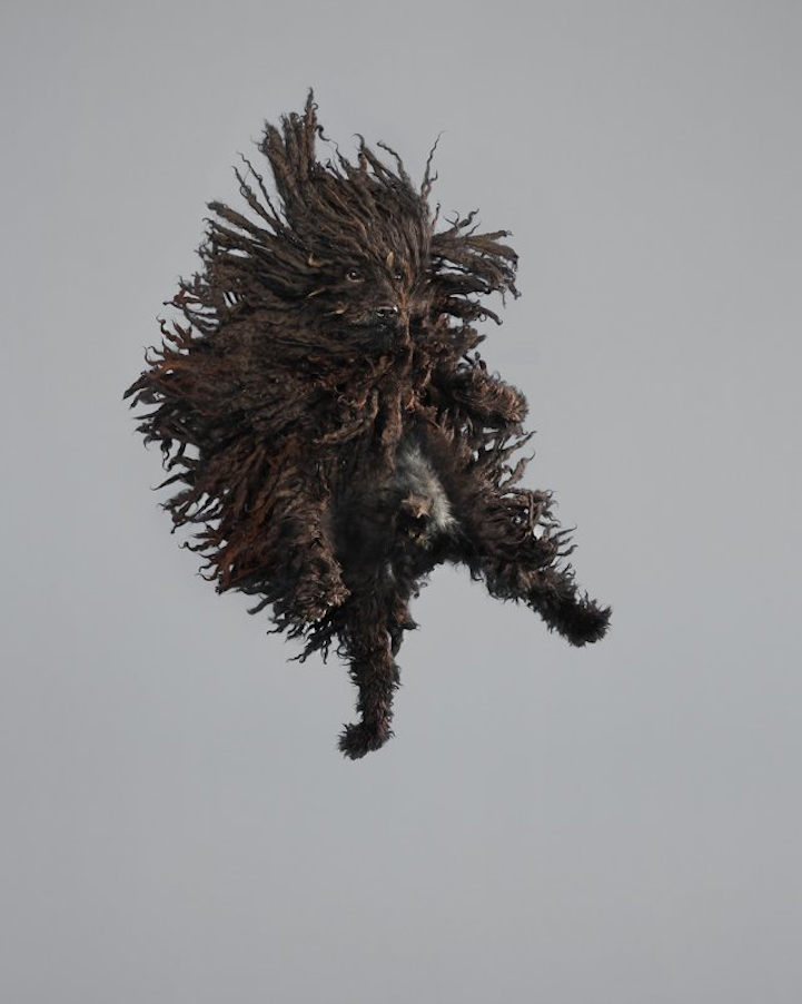 'Serie Freestyle', An Imaginative Photo Series of Dogs Caught in Midair During a Jump