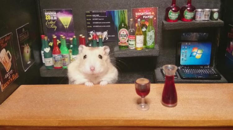 Hamster Bar 1