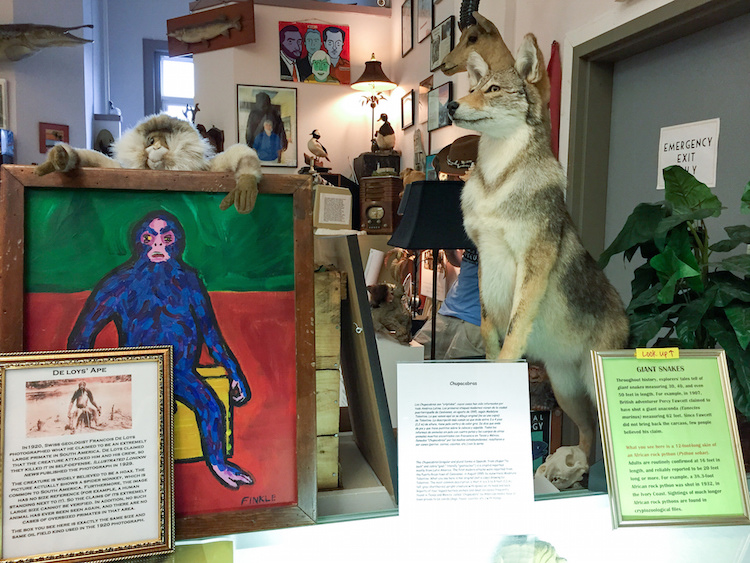 International Cryptozoology Museum2