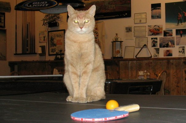 Mayor Stubbs and Ping Pong