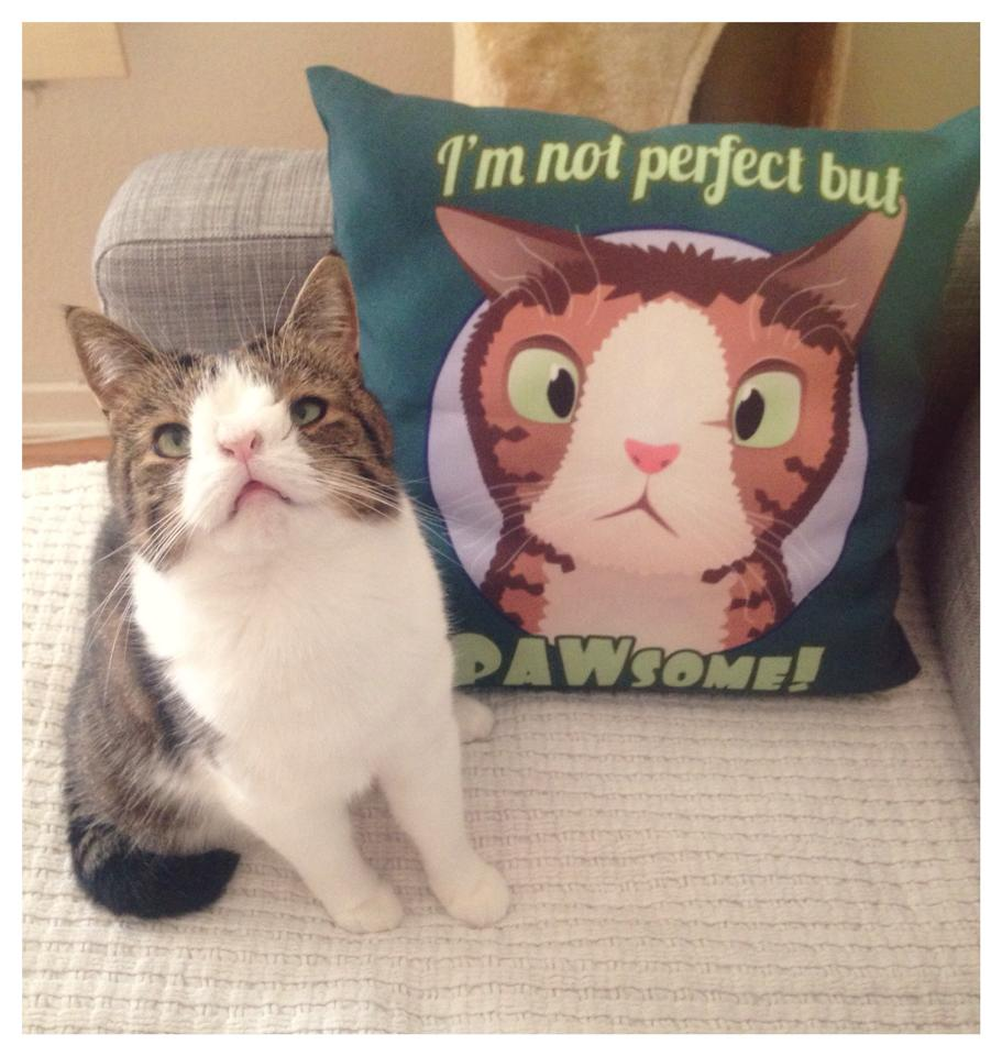 Monty the Unique Cat Born Without a Nasal Bridge Becomes Ad Hoc Ambassador for Imperfect Cats