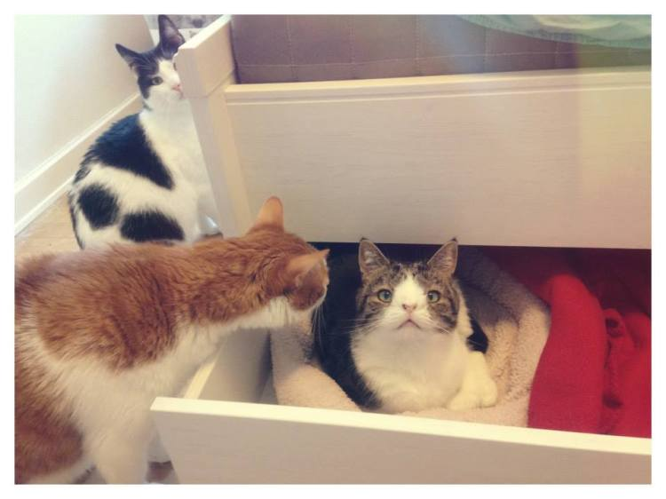 Monty in His Drawer with Friends