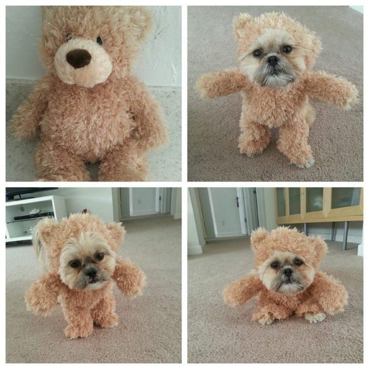 Munchkin Teddy Bear 4 Panel