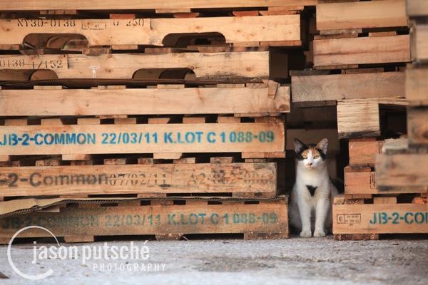 Pallet Cat