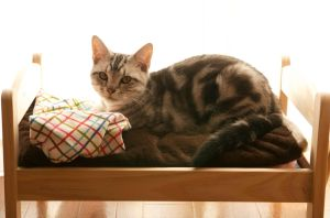 Tabby Doll Bed