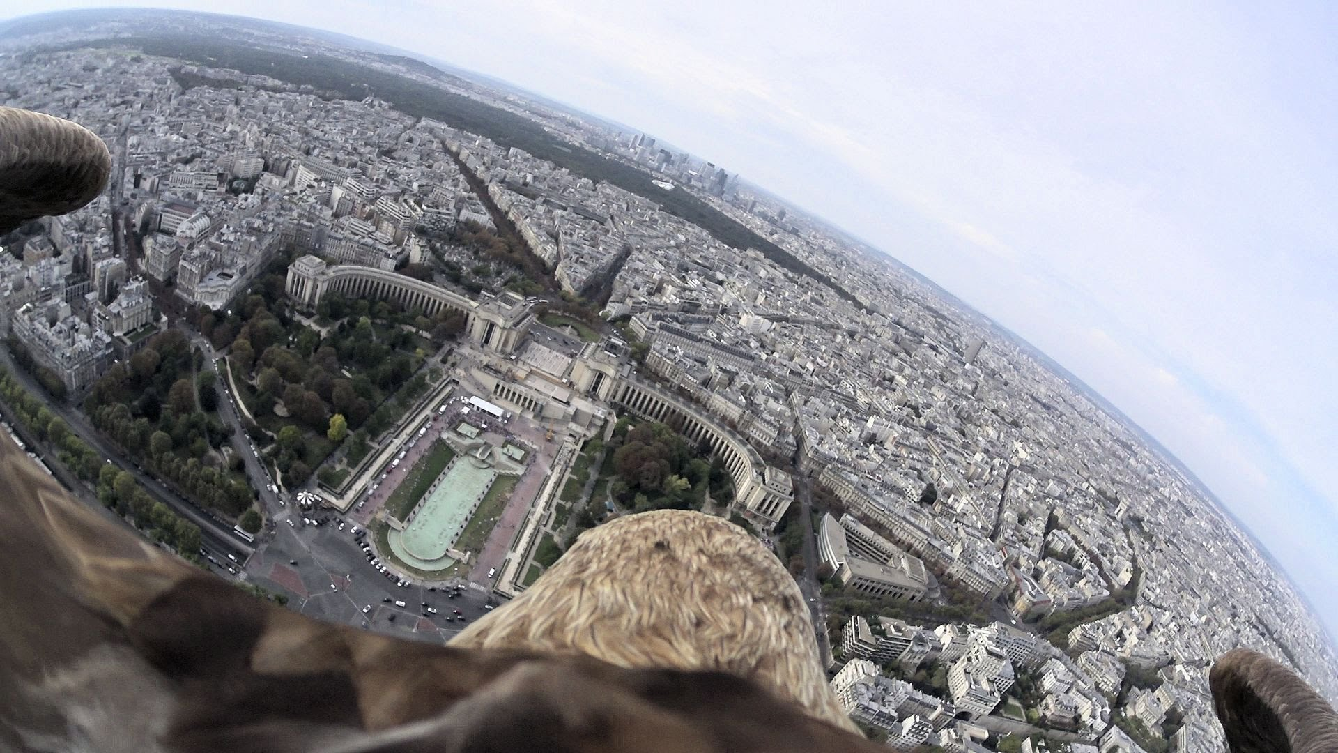 A White-Tailed Eagle Wearing a Camera Records a Breathtaking 111-MPH Flight Over Paris