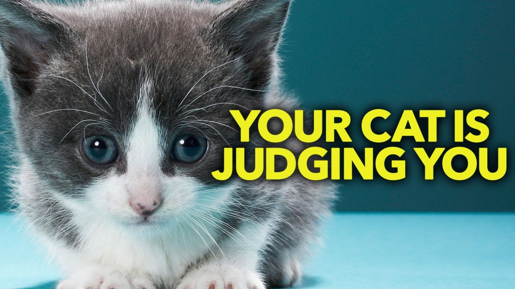 An Amusing Animation Giving Voice to the Passive-Aggressive Disdain Some Cats Have for Their Humans