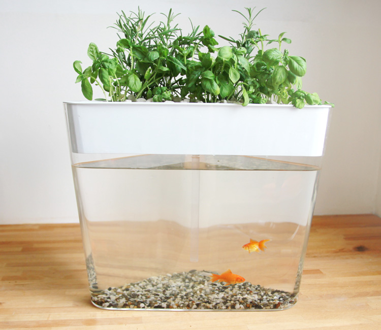 Ecofarm an at home mini ecosystem with a built in for Fish tank herb garden