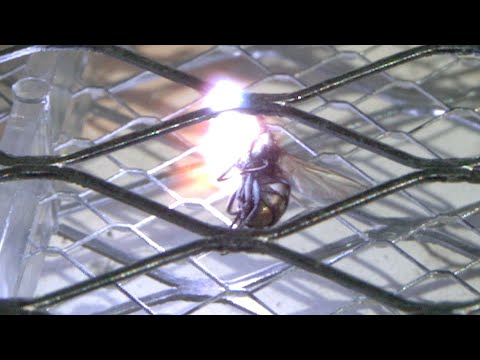 Gory Super Slow Motion Video of Fly Being Zapped by an Electric Bug Zapper Tennis Racket