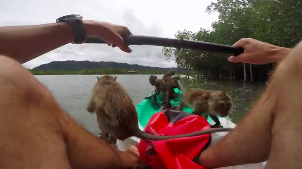 Kayaker in Thailand Attracts a Boatload of Monkeys With a Bag of Fruit