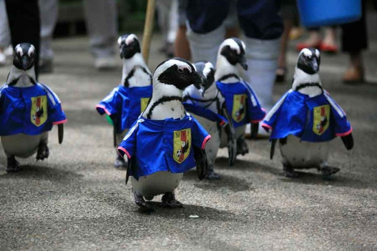 Penguin World Cup