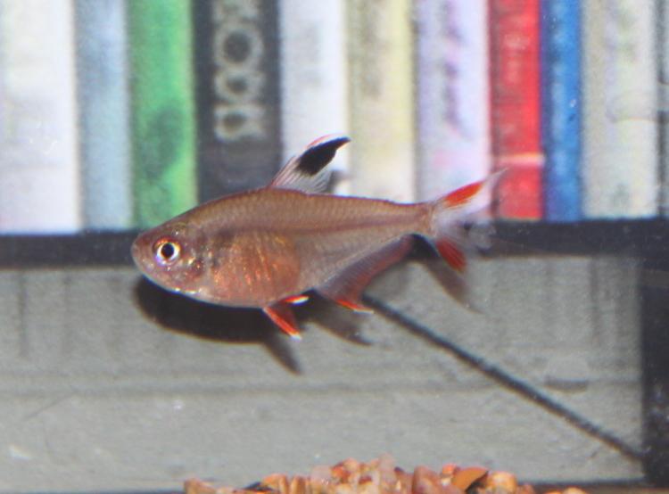 Seinfeld Fish