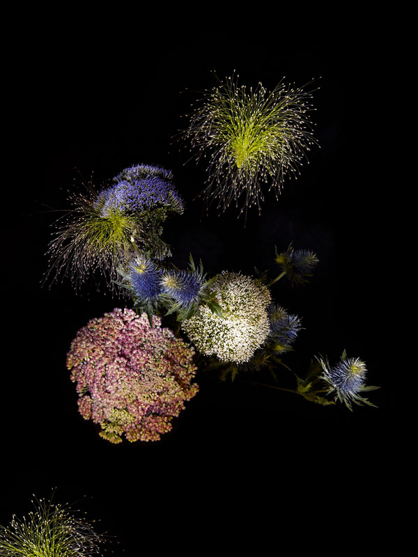 Flowers Arranged to Look Like Exploding Fireworks