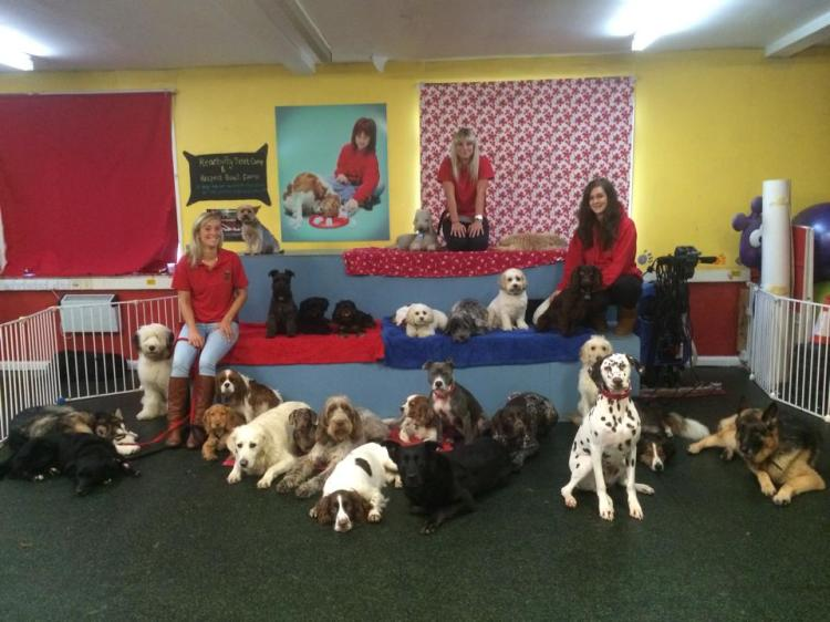 Academy 4 Dogs and Humans
