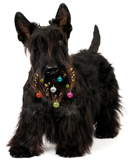 Dog Beard Baubles