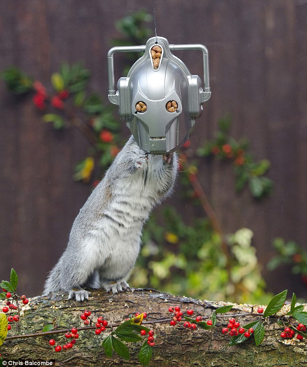 Doctor Who Superfan Creates An Overhead Squirrel Feeder In The