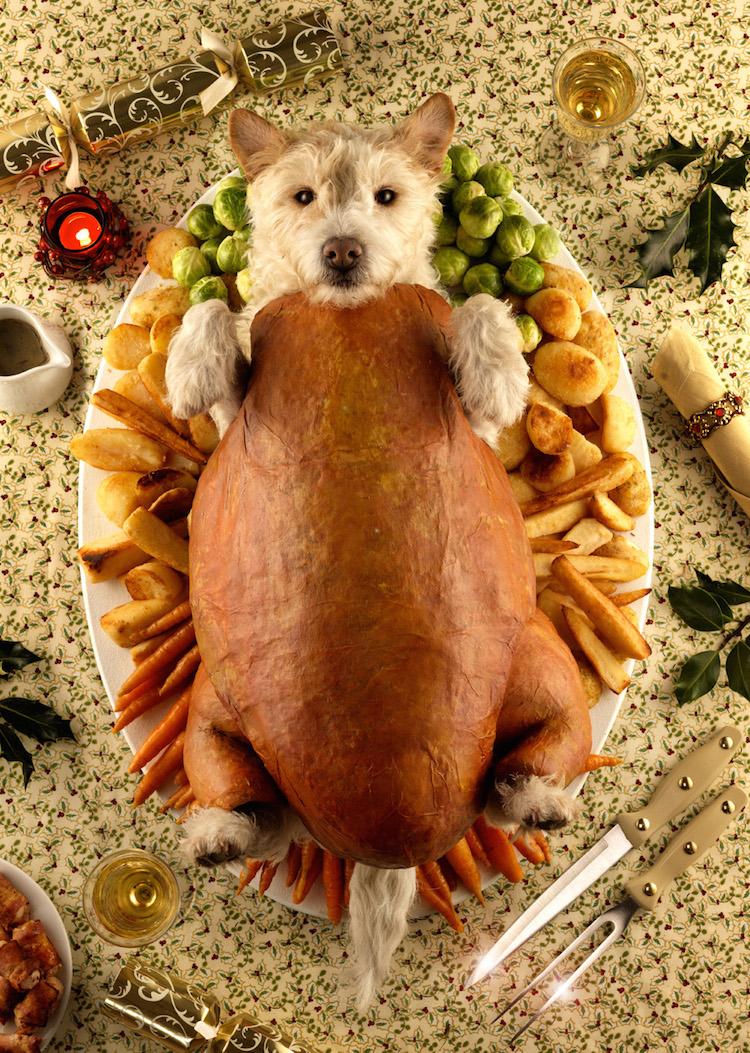 Dog Roast 2009