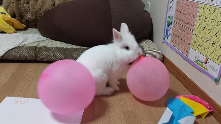 Moko and Pink Balloon