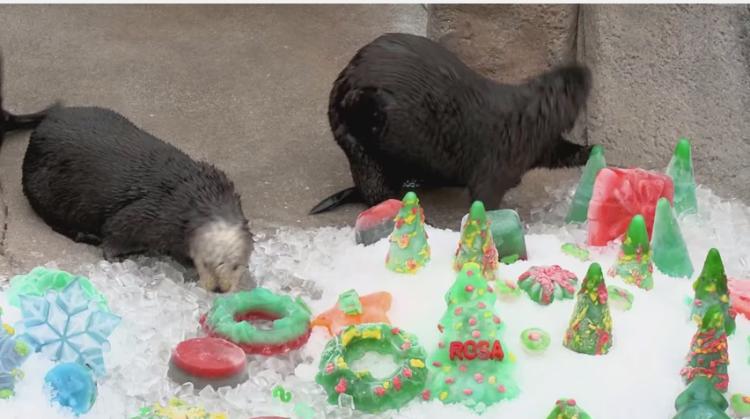 Otter Treats